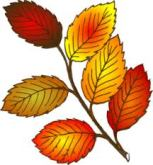 """""""The autumn leaves drift by my window..."""""""